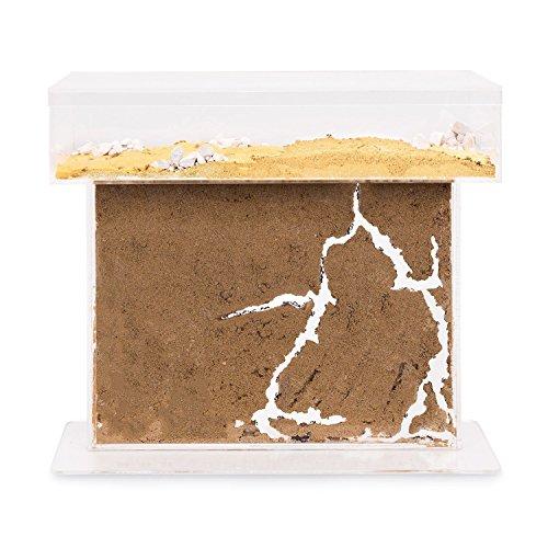 AntHouse - Natürliche Ameisenfarm aus Sand - T Acryl Set Big 25x20x1,5 cm (Gratis Ameisen)