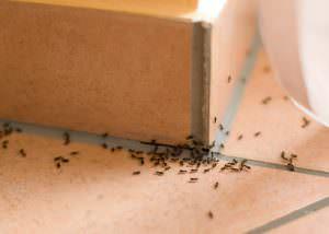 Ameisenplage im Treppenhaus