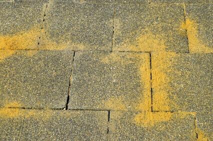 ameisen plage wegplatten garten