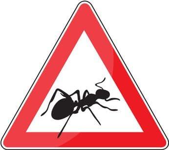 Ameisen Ratgeber