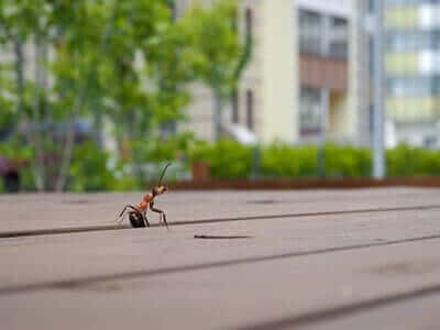 15 ratschl ge gegen ameisen im haus ameisen ratgeber. Black Bedroom Furniture Sets. Home Design Ideas