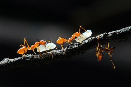 Ameisenfarm Fur Anfanger So Klappt Die Ameisenhaltung Ameisen