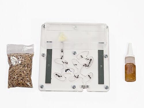 ameisen kaufen verschiedene arten und zubeh r f r die ameisenfarm ameisen ratgeber. Black Bedroom Furniture Sets. Home Design Ideas