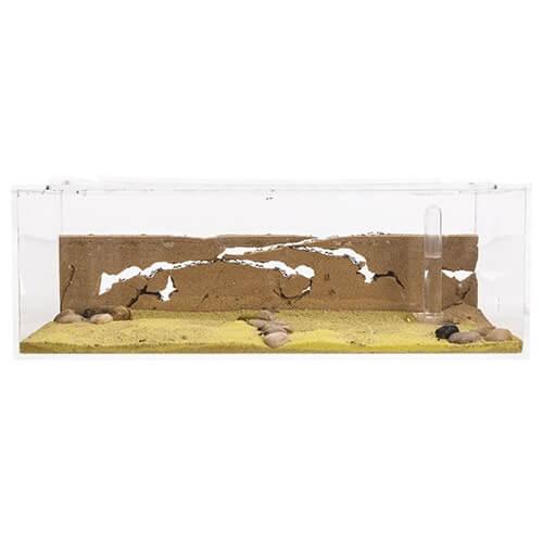 ameisen kaufen und ameisenfarm