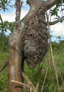 Kartonnest Ameisen