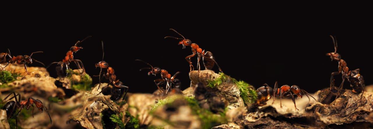 Leben und Besonderheiten der Ameisen